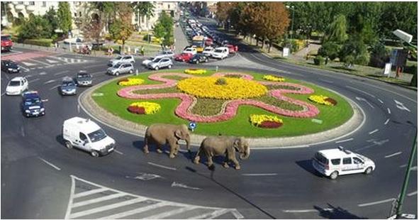 Doi elefanti au scapt in Brasov